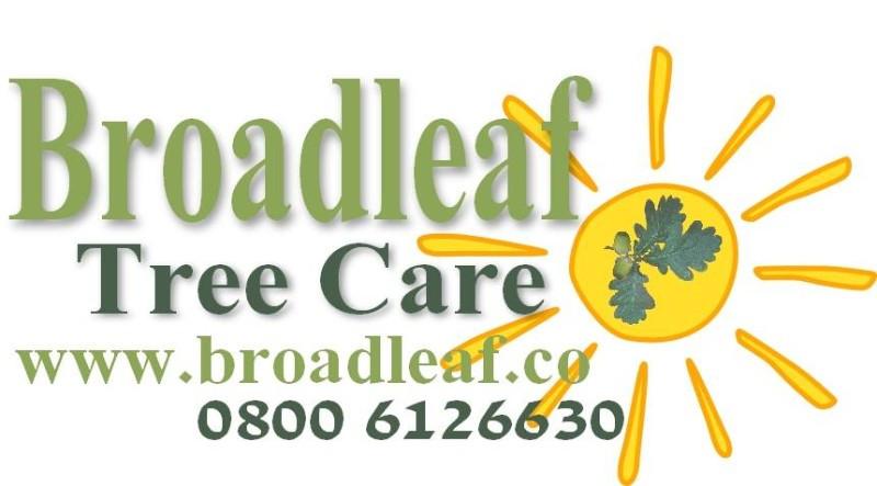 Broadleaf-Tree-Care