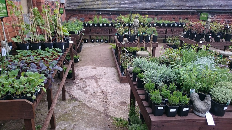 Hungers-Heath-Garden-Nursery3